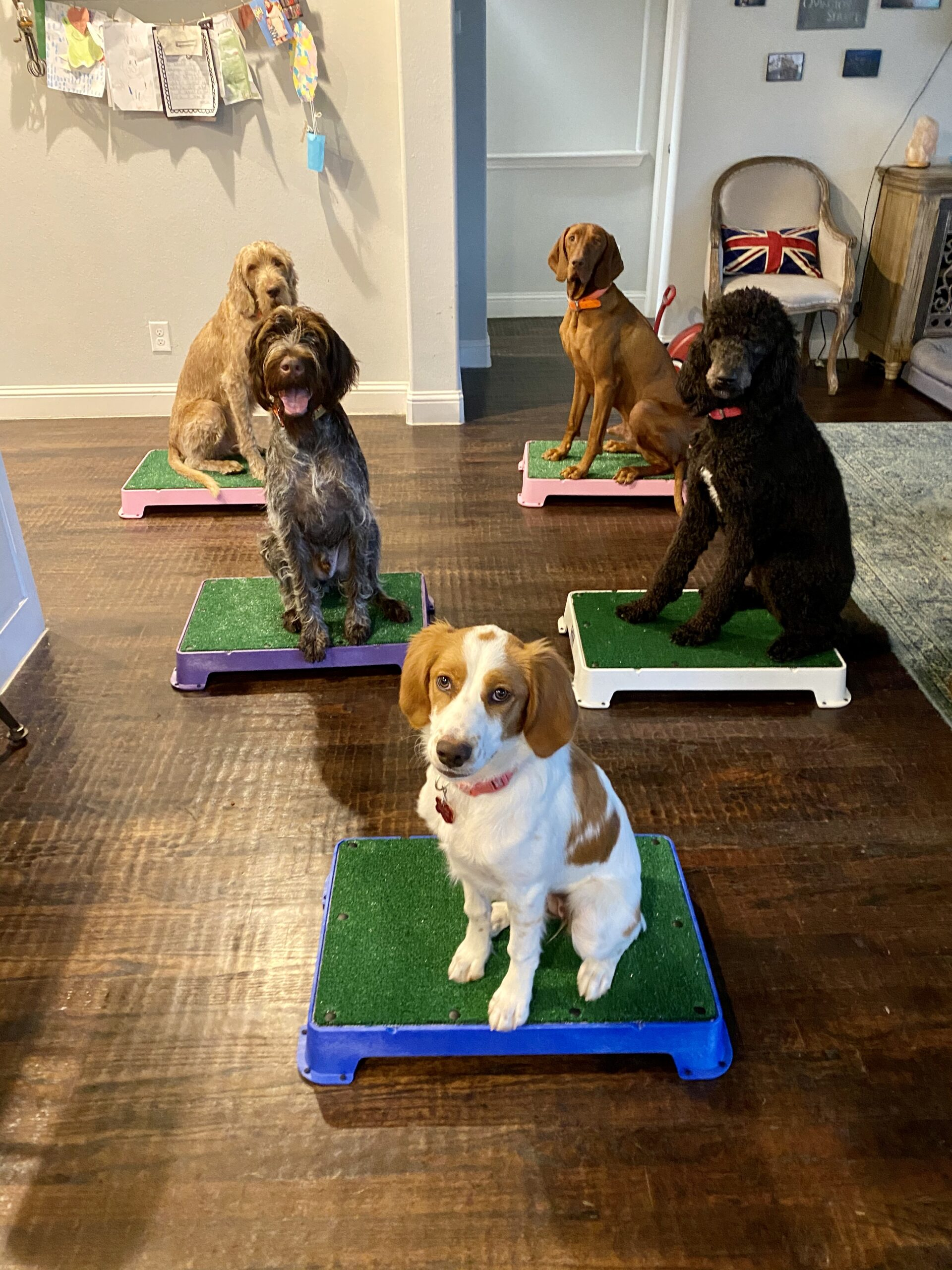 Obedience/Board and Train